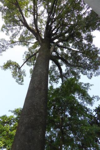 http://gandjlawrence.co.uk/photos/malaysia/Bill/P1050700_Large_.jpg