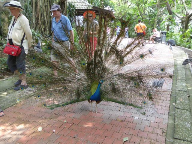 http://gandjlawrence.co.uk/photos/malaysia/Bill/P1050757_Large_.jpg