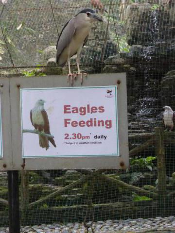 http://gandjlawrence.co.uk/photos/malaysia/Bill/P1050762_Large_.jpg