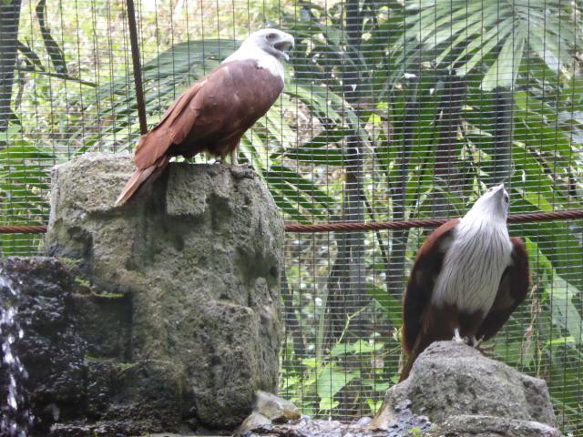 http://gandjlawrence.co.uk/photos/malaysia/Bill/P1050767_Large_.jpg