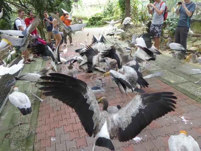 http://gandjlawrence.co.uk/photos/malaysia/Bill/P1050770_Large_.jpg