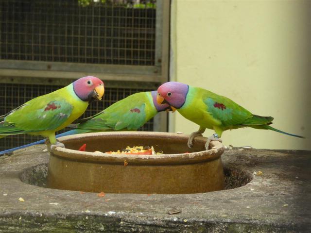 http://gandjlawrence.co.uk/photos/malaysia/Bill/P1050904_Large_.jpg