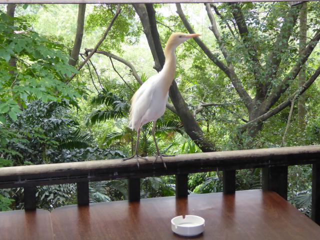 http://gandjlawrence.co.uk/photos/malaysia/Jane/P1010814.jpg