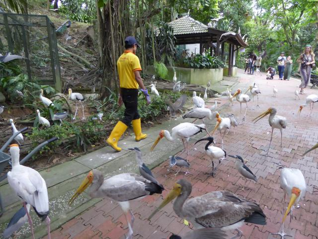 http://gandjlawrence.co.uk/photos/malaysia/Jane/P1010823.jpg