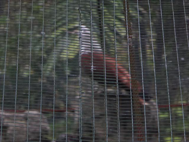 http://gandjlawrence.co.uk/photos/malaysia/Jane/P1010833.jpg